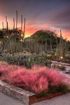 Visit the Desert Botanical Garden in #Phoenix in March and April to catch peak bloom for wildflowers such as Mexican poppies and desert lupine.
