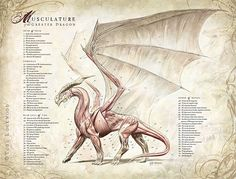 Musculature of the Greater Dragon by Todd Lockwood