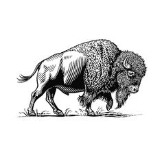 Pen & Ink Illustrations- Animals - KeithWitmer.com Buffalo Painting, Buffalo Art, Ink Illustrations, Illustration Art, Bison Tattoo, Buffalo Tattoo, Line Art, Native American Art, American Symbols