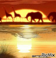AFRICA original backgrounds, painting,digital art by tonydanis GREECE HELLAS fantasy fantasia animation imagination gif peace love 3d Animation, Peace And Love, Imagination, Greece, Digital Art, Elephant, Backgrounds, Africa, The Originals