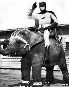 The Batman, c.1966 ( elephant / weird photography / funny )