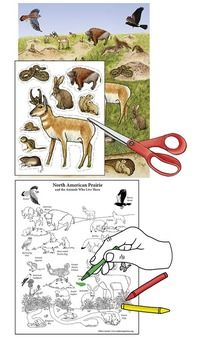 Learn about Animals and Habitats with simple, fun activities from Exploringnature.org Biomes, Fun Activities, Habitats, American, Simple, Illustration, Poster, Animals, Color