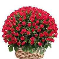 We help you send flower online to Mumbai. An online flower shop to order & deliver flowers in Mumbai. Now you can deliver & send flowers to Mumbai. Online Flower Shop, Send Flowers Online, Anniversary Flowers, Anniversary Gifts, 100 Red Roses, Cake Online, Flower Delivery, Flower Arrangements, Beautiful Flowers