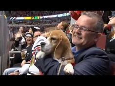 Westminster Kennel Club Dog Show winner Miss P and handler William Alexander caught the Blackhawks game on Monday.