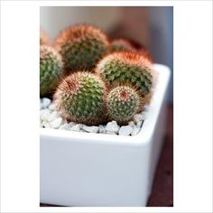 Cactus container gardens are a great bio addition to any space, and hardy if your thumb is less than green. :)