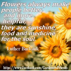Flowers always make people better, and more helpful; they are sunshine, food and medicine for the soul. - Luther Burbauk #gardening #quotes