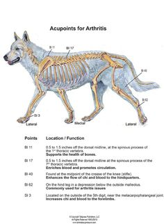 Use these points to help relieve the discomfort of arthritis for your dog!