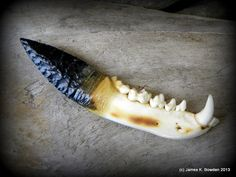 Snowflake obsidian blade hafted to a raccoon mandible using hide glue and REAL deer sinew.  Knife made by James K. Bowden.