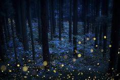 The Stunning 2021 Creative Photo Awards Deep Forest, Forest Fairy, Creative Photos, Cool Photos, Amazing Photos, Cool Pictures, Night Forest, Photo Awards, Picture Editor