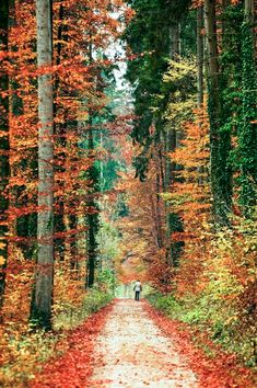 Autumn: on the trail (no location given) by swissloko