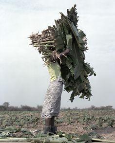 "Juxtapoz Magazine - ""Terrain"" by Jackie Nickerson Contemporary Photography, Artistic Photography, Art Photography, Studio Nicholson, Faceless Portrait, Green Life, Green Man, Landscape Photographers, Lion Sculpture"