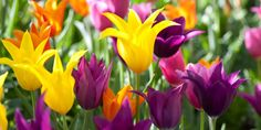 Çiçekler, benzersiz ifadeleri ile sana kim olduğunu anlatır aslında. bazı çiçekleri diğerlerine göre daha güzel bulmamızın sebebi, onların oturdukları yerden kendine özgü yapıları ile yansıttıkları karakterleri ile kendimizinkini bütünleştiriyor olmamız olabilir mi?