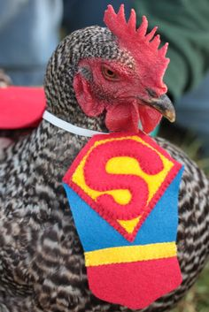 Ba-Gawks: Chickens in tiny costumes: Halloween Fun