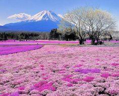 Japan's Beautiful Flower Fields