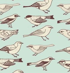 bird giftwrap