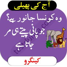 Riddles in Urdu for Kids with Answers 2020 Tough Riddles, Riddles With Answers, Funny Puzzles, Chai Quotes, Islamic Quotes, More Fun, Anushka Sharma, Humor, Books