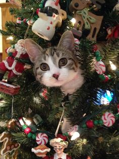 awesome Adorable cats who are excited about Christmas Trees