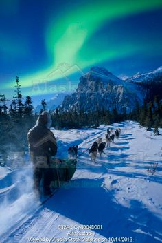 Photo of Musher and dog team traveling beneath the Aurora in the White Mountains Recreation Area during Winter in Alaska. Digital Composite....