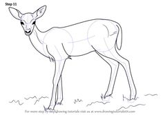 Learn How to Draw a Baby Deer aka Fawn (Zoo Animals) Step by Step : Drawing Tutorials