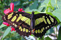 The Butterfly House -- because walking through a room full of butterflies is very cool!