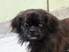 SAFE 11/16/13 CHIP, 5 YRS MANHATTAN CENTER https://www.facebook.com/photo.php?fbid=707925535886995&set=a.611290788883804.1073741851.152876678058553&type=3&theater
