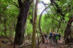 Walks through ancient forests with guides at Hluhluwe River Lodge, KwaZuluNatal, South Africa