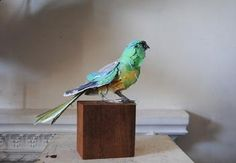 Anna-Wili Highfield makes sculptures of birds from archival cotton paper, that is painted and sewn together.