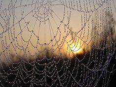 Beautiful, spider webs always amaze me so delicate