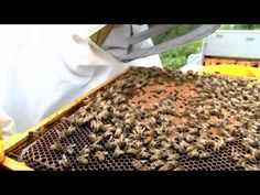 Beekeeping lessons: a beehive check up and maintenance with Allen the Beekeeper - YouTube