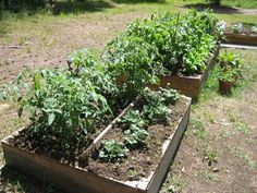 DIY: Getting Dirty with Square Foot Gardening