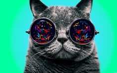 Funny Cat With Glasses Wallpaper - http://www.gbwallpapers.com/funny-cat-glasses-wallpaper/ (Cat, Funny, Glasses, Wallpaper / Animals)