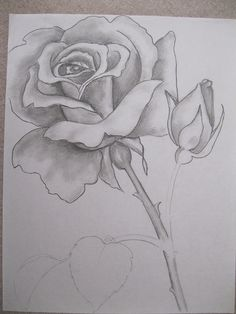 Rose Drawing Discover Yahoo -login Rose in pencil by Patsy Cute Flower Drawing, Pencil Drawings Of Flowers, Flower Sketches, Floral Drawing, Pencil Art Drawings, Flower Art, Rose Drawings, Easy Drawings Sketches, Cool Art Drawings