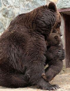 Медвежонок получает взбучку | Блог fkmrf123 | КОНТ