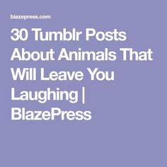 30 Tumblr Posts About Animals That Will Leave You Laughing   BlazePress