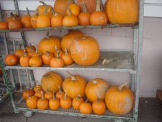 Last minute pumpkins at 662 Montreal Street! Pick up the perfect jack o' lantern in time for Halloween tonight!