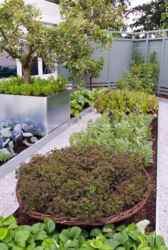 Modern Vegetable Garden in Backyard | Plant & Flower Stock Photography: GardenPhotos.com