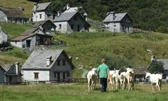 September,Goats guardian in Val Loana