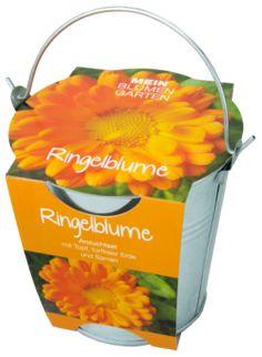 Pflanzset in Zinkeimer, Ringelblume - Ringelblume - die Ringelblume hat ihren Namen von der Form der Samenkörner, die in allen Formen gekringelt sind. Ringelblumen keimen schnell und blühen bereits na