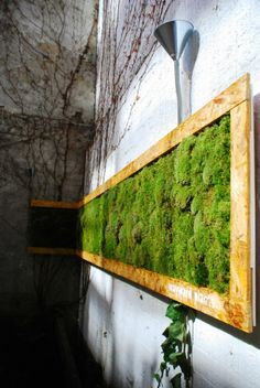 Moss wall.  Imagine the oxygen from this!