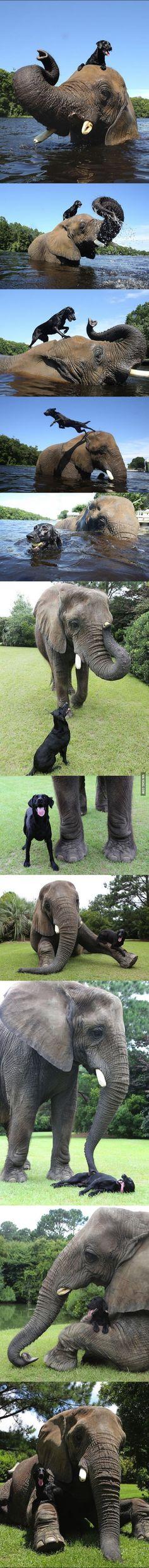Elephant and dog, BFF