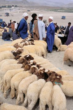 Annual souk of cattle, tribe of Ait Hdiddou, Village of imilchil, Atlas mountains, Morocco