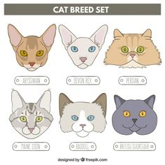 Hand drawn cat breed set Free Vector