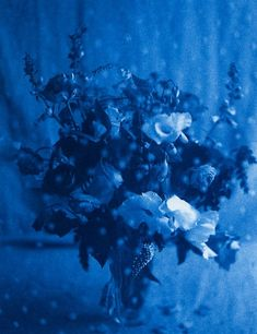 Photographer John Dugdale Lost His Sight, But Not His Vision - Studio 360 Christian Symbols, Cyanotype, Love Blue, World Of Color, Blue Aesthetic, Blue Walls, Floral Bouquets, Art World, My Favorite Color