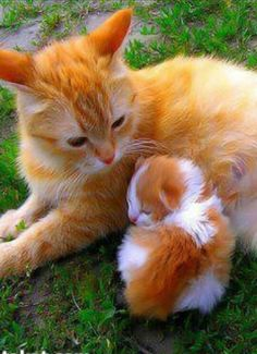 Just so precious ... the love between Mom and her kitten ... such beautiful markings of tabby ... so special ...