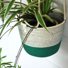 Add some greenery to your home with these unique hanging planters! Our hanging planters are available in three different sizes. To adjust the heights, just tie as many knots as needed.  Mia Mélange planters are made from 100% cotton rope which we carefully sew together in a coiling technique. The cotton is grown locally in South Africa by farmers who are members of the Better Cotton Initiate (BCI). Cotton Rope, Hanging Planters, Potted Plants, Farmers, In The Heights, Greenery, South Africa, Knots, Sewing