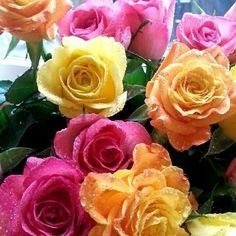 Color me beautiful Roses