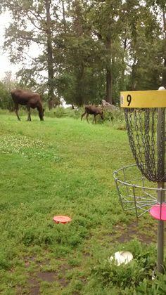 Alaska Disc Golf