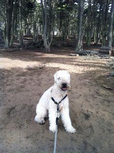 At favorite Presidio hike.