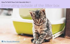 Let's go over 10 signs of illness in cats – although many of them also apply to dogs.