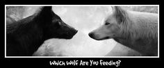 Which wolf are you feeding? There are two wolves inside you. One is darkness and despair, the other light and hope. Which one wins? Can you answer this?